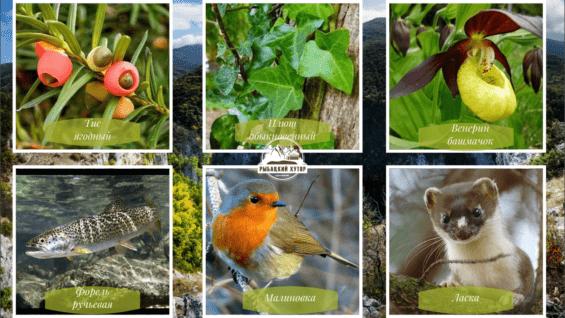 Многие растения и животные, нашедшие пристанище в Большом каньоне, занесены в международную Красную книгу