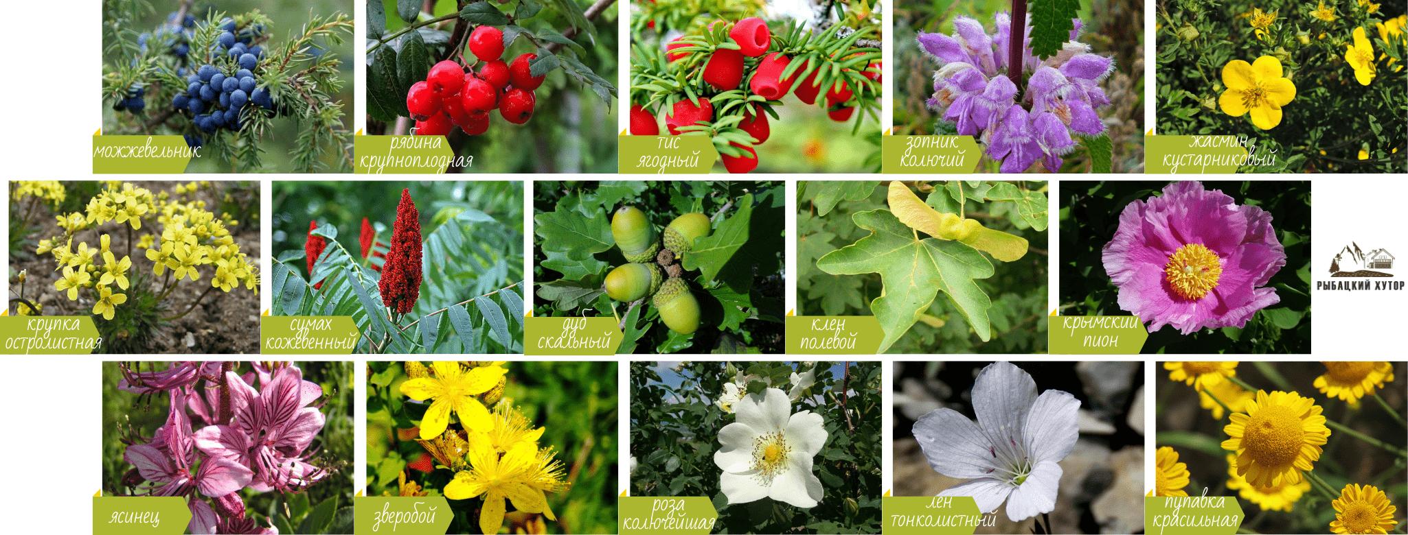 Флора горы Седам-Кая